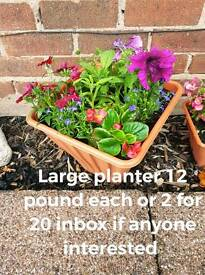 Lovely mixed planters for ur garden this summer