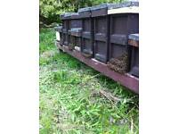 Honey bees for sale..5 frame nuc