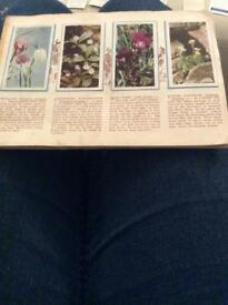 Brooke Bond Tea card collection. Wild Flowers