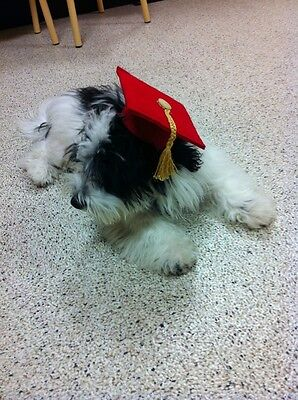 Dog Graduation Cap / Dog Graduation Hat