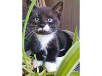 Lovely kitten ‼