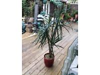 Modern artificial plant large
