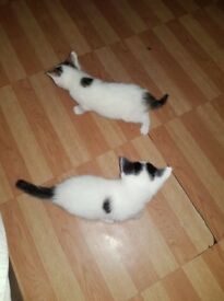 Beautiful kittens for sale !