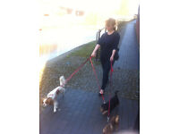 Professional, insured, experienced dog walker, cat and small pet sitter in Chorlton