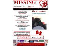 Missing black toy poodle