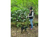 Pet sitter/dog walker
