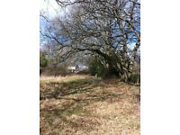 Paddock, Woodland, Agricultural Plot for Rent near Horton in Dorset (three quarters of an acre)