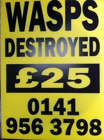 WASPS DESTROYED - £25 PHONE 0141 956 3798