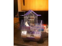 Budgies , parakeets with cage