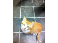 Ginger make kitten