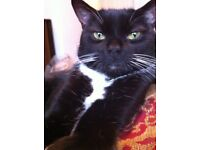 Black and white cat missing from Twyford,Berks