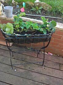 cast iron flower basket with strawberry plants