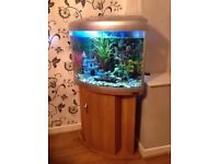 Aqua one UFO 550 tropical fish tank with fish