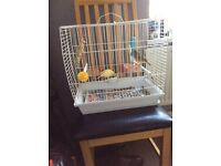 Canaries for sale with cage
