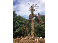 Acorn Tree Services, Tree Surgeon. Arborist. Insured,qualified,experienced,affordable. Free advice