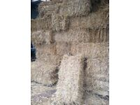 Small square bales of barley straw , baled last week. Possible delivery for bulk orders