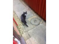 Young male black and white cat found