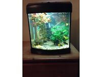 Fish tank with light, filter and 12 cold water fish