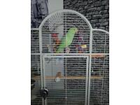 Indian ringneck parrot with Montana cage