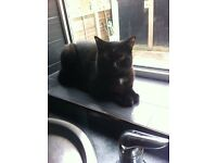 Black cat 10 months free to good home!