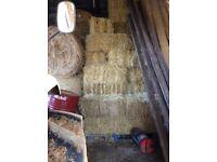 Barley straw bales