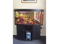 4 ft Juwel Bowl Shape Fish Tank-Full Set Up