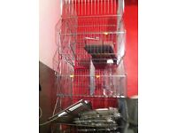 Display Dump Bins -Zinc Shop Crisp Stacking Baskets (47cm Wide Wire) and 10 divider
