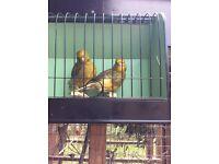 Pair border canaries