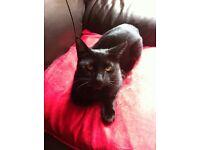 MISSING Slim Black Cat