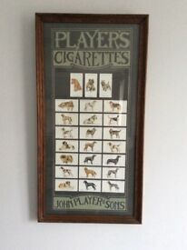 Players cigarette card picture of dogs