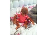 Ashton drake huggable real life monkey only 6 month old paid £180 looking for £70