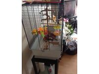 Bird cage and accessories ,food etc