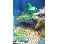 Coconut cave with moss cover fish/shrimp/aquarium