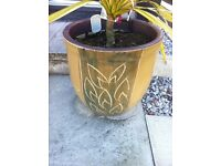 Pair of large designer clay flower planters