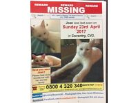 Lost Cat - Walsgrave/Wyken White, Female, Chipped, Short Hair PLEASE HELP