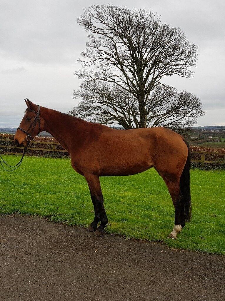 Horse for loan Nancy