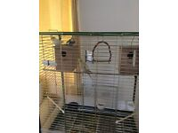 3 Cockatiels and large Bird Cage
