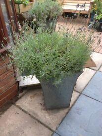 Tall garden planter