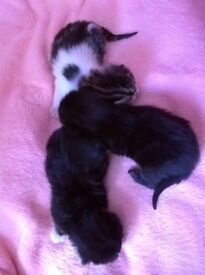 3 beautifull kittens