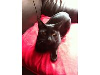 Please Help find our missing black cat