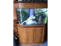 Corner fish tank with external filter, heater and light, very solid