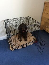 Small dog cage nearly new