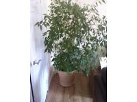 House plant for sale
