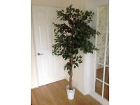 8 Artifical trees with white pots, used for wedding venue decoration.