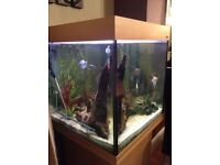 Tropical fish, Gourami plus others for sale