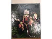 Painting - Slipper Orchid