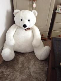 X large super white teddy needs a forever home .