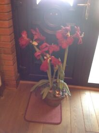 Real looking artificial flower plant