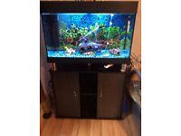 125/litre 5month full fish tank set up