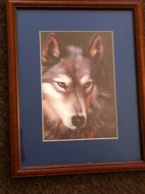 3D wolf picture